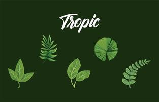 bundle of four leaves plants green nature icons and tropic lettering vector