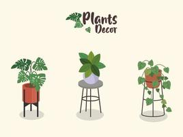 bundle of three home plants in ceramic pots decor and lettering vector
