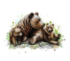 Brown mother bear with her cubs from a splash of watercolor hand drawn sketch Vector illustration of paints