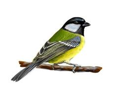 Portrait of a tit bird sitting on a branch on white background hand drawn sketch Vector illustration of paints