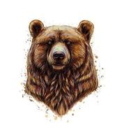 Portrait of a brown bear head from a splash of watercolor hand drawn sketch Vector illustration of paints