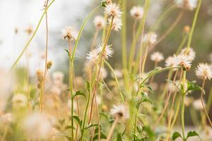 fondo de flores de verano foto