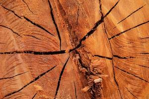 The background texture of the cut tree photo