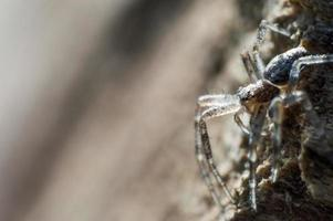 Small gray spider in macro photo