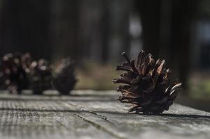 Brown pine cone on a dark wooden board photo