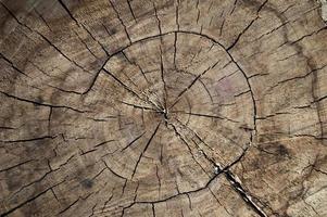 Textura de tocón de madera closeup foto