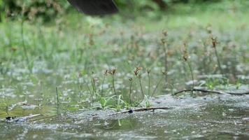 close-up foto de agricultor rural asiático cavando o solo com uma enxada para se preparar para o plantio em dia chuvoso video