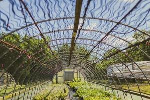 Beautiful Greenhouse Roof photo