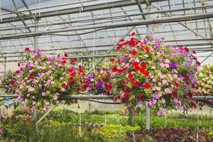 flores de pétalos de colores surtidos foto