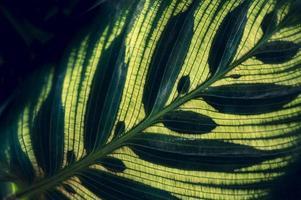 Dark tropical green foliage background photo
