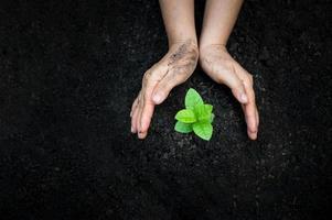 Hands watering plants photo