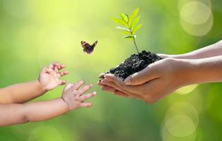 Concept of hands growing seedlings on bokeh green background photo
