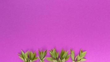 Grean leaves on pink background Simple flat lay with pastel texture and copy space Fashion eco concept Stock photo