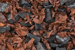 muchas piedras de colores en la orilla foto