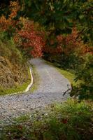 camino con árboles marrones en la temporada de otoño foto