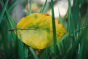 hoja amarilla en la naturaleza en la temporada de otoño foto