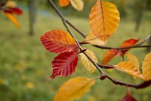 hoja marrón en la temporada de otoño foto