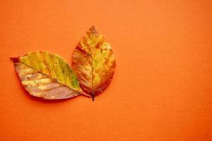 hojas marrones en la temporada de otoño foto