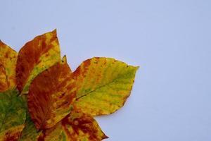 hojas amarillas en la temporada de otoño foto