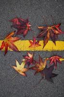 hojas de arce rojo en la temporada de otoño foto