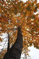 árbol con hojas rojas y marrones en la temporada de otoño foto