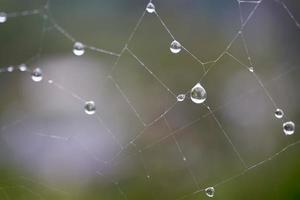 Gotas en la telaraña en días lluviosos. foto