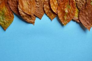 dry brown leaves on the blue background photo