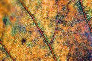 hoja amarilla en la temporada de otoño fondo amarillo foto