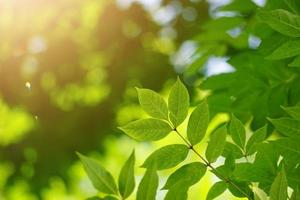green tree leaves in spring season green background photo