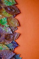 hojas secas marrones sobre fondo naranja foto