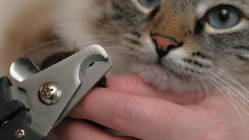 Pet care Claw cut video
