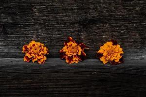 Tres flores chernobrivtsi amarillas se encuentran sobre el fondo de madera foto