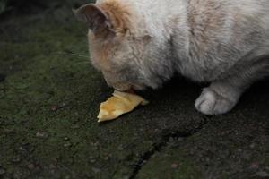 Homeless cat with orange white fur eats photo