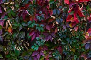 Colorful leaf texture photo