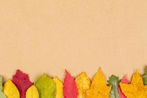 coloridas hojas de otoño sobre fondo neutro foto