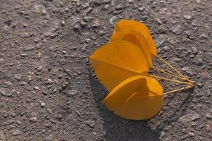 Close-up shot of yellow leaves lying on a black asphalt road photo