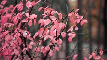 Branch with red and pink leaves on the background of bare trees photo