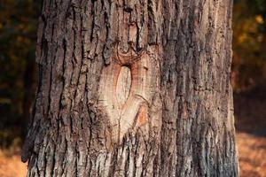 Hueco en un árbol de cerca en el parque de otoño foto