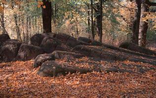 Roca llena de musgo y hojas amarillas en el colorido bosque otoñal foto