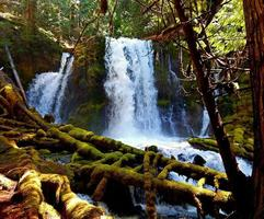 Spring At Downing Creek Falls Cascade Range near Marion Forks OR photo