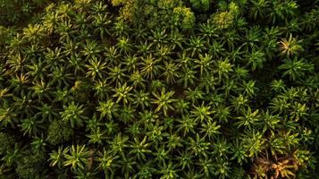 Aerial Photography Of Trees photo
