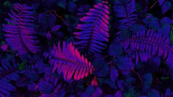 Tropical glowing leaves photo