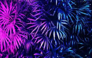 Tropical leaf forest glowing in the dark background photo