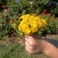 Child holds a bouquet of yellow blossoms in hand in front of blurred colorful background photo