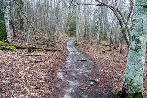 Ice on a trail photo