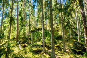 Ycke forest nature reserv photo