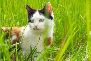 Beautiful kitten in green grass cat on the lawn photo