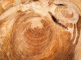 Detail by sawing spruce stump photo