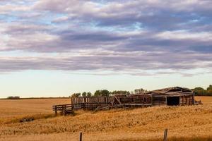 Rustic farm buildings in the fields Wheatland County Alberta Canada photo