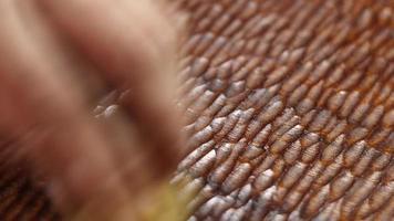 wax polishing mahogany board video